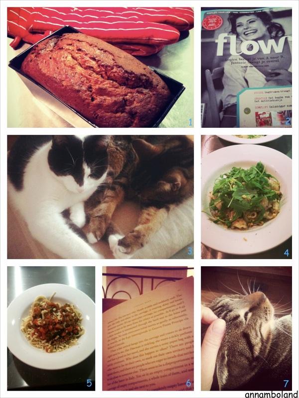 Week1_Fotor_Collage