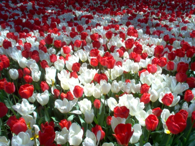white-and-red